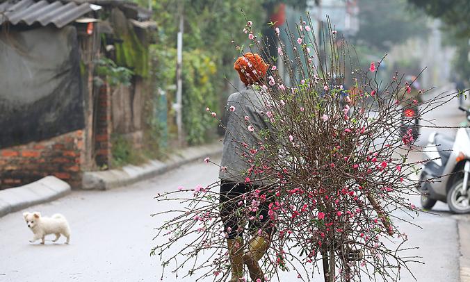 No Tet homecoming for Vietnamese expatriates