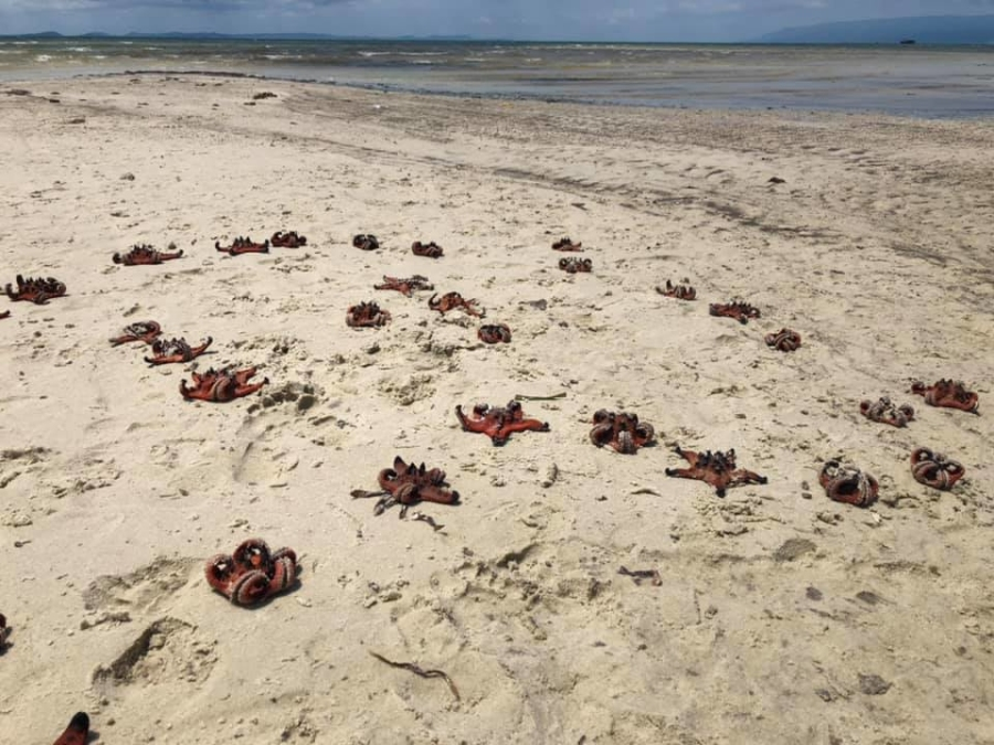 Starfish pay with their lives for a few photo-ops on Phu Quoc island